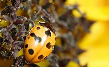 biodiversity-data