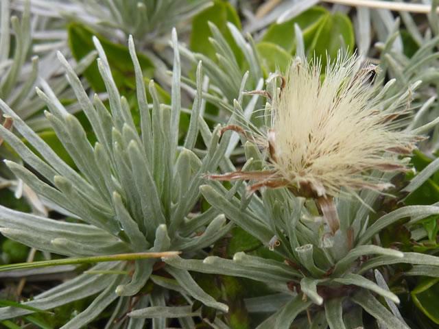 plant-names-database