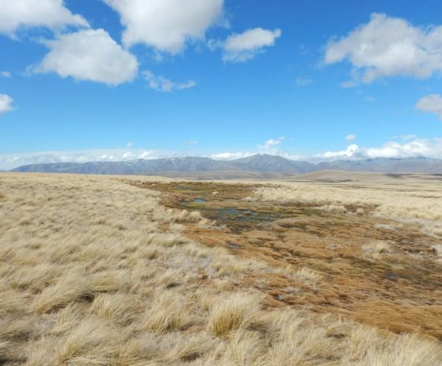 mt-ida-biodiversity-monitoring